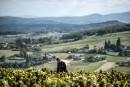 Trois tendances du monde viticole