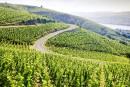 La Vallée du Rhône veut produire plus de blanc
