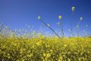 Mieux comprendre les allergies saisonnières