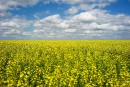 Conflits commerciaux: les producteurs de grains appellent à l'aide