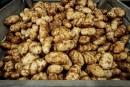 La patate québécoise prend le chemin del'Amérique latine