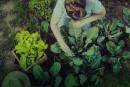 Planter sanssetromper