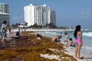 Mexique: des navires spéciaux pour éliminer les algues sargasses des plages
