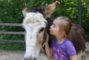 Sorties familiales: on visite les ânes!