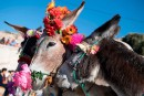Au Maroc, le nouveau roi des ânes est une reine