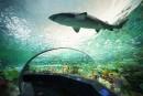 Un homme qui a nagé nu avec les requins à Toronto plaidera coupable