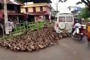 Gare aux canards!