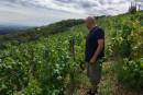 Une récolte plus tardive dans la vallée du Rhône