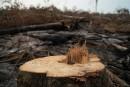 La déforestation de l'Amazonie a presque doublé en un an