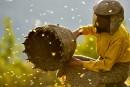 Honeyland : tragique et magnifique ★★★★
