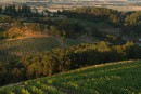 La production de cannabis près d'un vignoble a-t-elle des effets dans le vin?