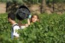 Les vins bioreprésentent 12% des surfaces en France