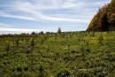 Québec songe àcréer son propre mécanisme devérification de plantations d'arbres
