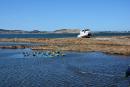 Avant d'utiliser leurs nouvelles cages, les pêcheurs les laissent tremper... | 3 février 2020