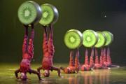 OVO du Cirque du Soleil