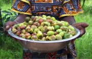 Le karité du Burkina Faso