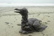 Les principales marées noires des 40 dernières années