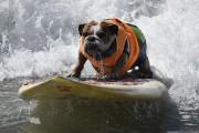 TOPSHOT-US-LIFESTYLE-SPORT-ANIMAL-DOG-SURF