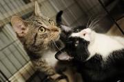 Adoption_chats_SPCA1972.JPG