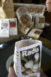 Semences de radis biologiques des Jardins de l'Écoumène.... (Photo Rémi Lemée, La Presse) - image 1.0