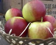 La pomme «Redfree» a été considérée comme l'une... (Photo fournie par Pierre Lavallée) - image 1.0