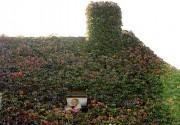 Les toits verts sont utilisés depuis des décennies... (Photothèque Le Soleil) - image 1.0