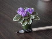 La micro-violette africaine «Shy Blue».... (Photo fournie par Francine Pilon) - image 1.0