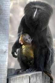 Le nouveau-né et sa mère au zoo de... (Photo: AFP) - image 2.0