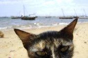 Sur la plage de Lamu...... (Photo: Bruno Blanchet) - image 1.0