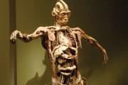 Qui se cache derrière les corps utilisés pour... (Photothèque Le Soleil) - image 1.0