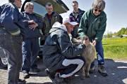 Le chien de la famille a été retrouvé... (Photo: Patrick Sanfaçon, La Presse) - image 2.0