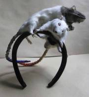 taxidermie accessoire