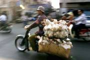 Un homme transporte des canards à Saigon.... (Photo: AP) - image 2.0
