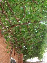 Les haricots, les concombres et les... (Photo fournie par les Urbainculteurs) - image 2.0