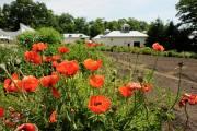 Le parc du Domaine Cataraqui est ouvert au... (Le Soleil, Patrice Laroche) - image 1.0