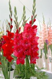 Fleurs En Aout Idee D Image De Fleur