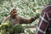 Des milliers de travailleurs agricoles... (Photo Ninon Pednault, La Presse) - image 2.0