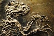 Ce fossile était enfermé dans une roche qui... (Photothèque Le Soleil) - image 1.0