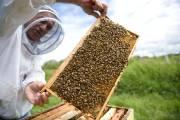 L'apiculteur Marc Lucas a été un des premiers... (Le Soleil, Steve Deschênes) - image 2.0