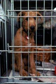La cage est un outil temporaire, et il... (Photo Digital Vision/Thinkstock) - image 1.0