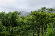 Le parc national d'El Yunque est une destination... (Photo Thinkstock) - image 3.0