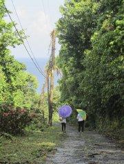 Brève averse jamaïcaine... (Photo Violaine Ballivy, La Presse) - image 2.0