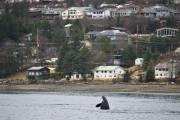 Juneau, en Alaska, le 13 mars dernier. ... (Photo Archives AP) - image 3.0