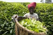 Le Rwanda, devenu le pays le plus pauvre... (PHOTO MARTIN LEBLANC, LA PRESSE) - image 2.0