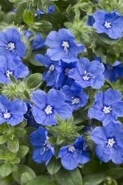 La fièvre horticole grimpe avec le... (Photo fournie par Proven Winners) - image 2.0