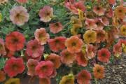 La fièvre horticole grimpe avec... (Photo fournie par Colorado State University) - image 3.0