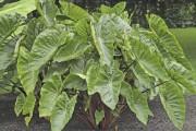 La fièvre horticole... (Photo Claude Vallée, fournie par Les Exceptionnelles) - image 6.0
