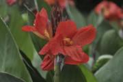 La fièvre horticole... (Photo Claude Vallée, fournie par Les Exceptionnelles) - image 9.0