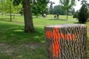 L'agrile du frêne a laissé ses traces dans... (Le Soleil, Jean-François Cliche) - image 2.0