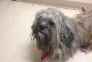 Ce petit chien, surnommé Paco à la SPAM,... (Photo: SPAM) - image 1.0